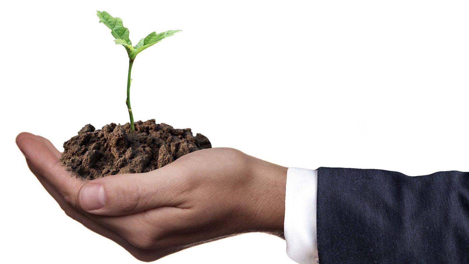Männliche Hand die sinnbildlich einen Steckling in Erde hält um Feedback geben und Potenzial Ihrer Mitarbeiter zum blühen bringen, zu verdeutlichen.